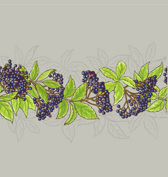 elderberry seamless pattern vector image