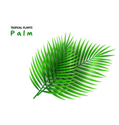 isolated realistic palm vector image
