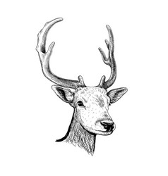 Deer hand drawn sketch vector