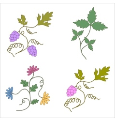 Grapevine wine design elements a set vector image