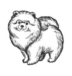 spitz dog animal engraving vector image