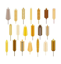 Ears of cereals and grains icons set vector image vector image