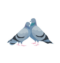 cute couple pigeons female and male birds in vector image