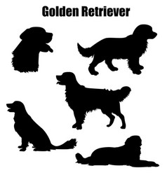 Golden retriever purebred dog vector