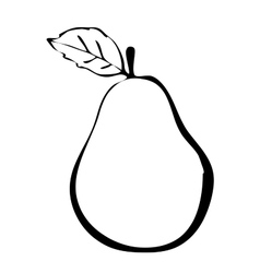 Hiqh quality pear drawn in outline vector image