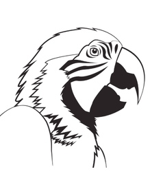 Parrot drawing icon vector