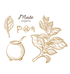 Set mate cup gold vector