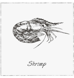 Shrimp Hand drawn sketch Collection of seafood vector image