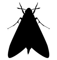 Moth vector