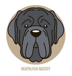 portrait neapolitan mastiff vector image
