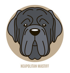 portrait of neapolitan mastiff vector image