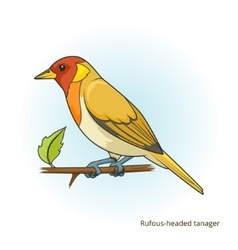 Rufous headed tanager bird vector image