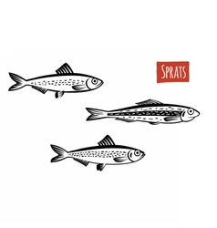 Sprats black and white vector