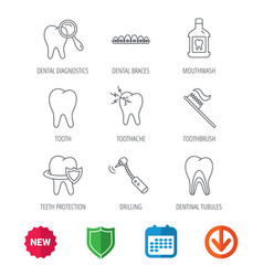 Tooth dental braces and mouthwash icons vector