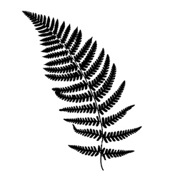 Fern frond black silhouette vector
