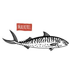 Mackerel black and white vector image