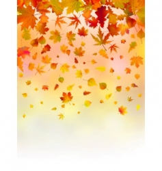 Bright leaves of autumn card vector