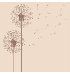 Dandelion flight vector