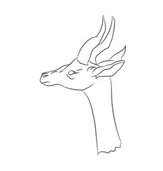 Gazelle portrait lines vector