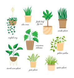 Home plants set vector