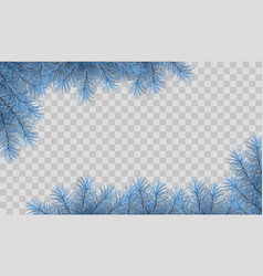 Pine tree branches vector