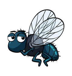Sad housefly on white background vector