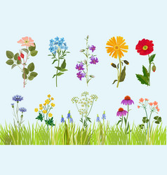 flowers collection botanical wild plants field vector image