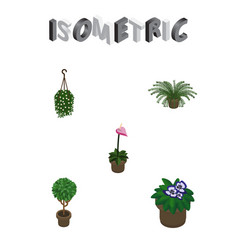 Isometric houseplant set of tree flowerpot plant vector