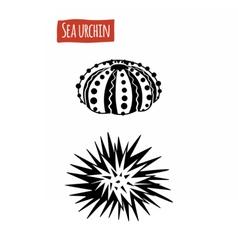 Sea Urchin black and white vector image