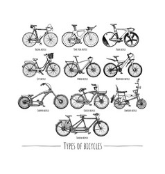 Types of bikes vector