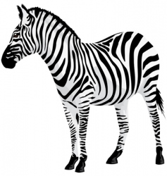 zebra vector illustration vector image