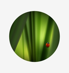 Fresh green grass and lovely red ladybug Summer vector image
