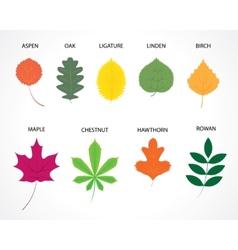 tree leaves vector image
