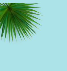 beautiful palm leaf tropical background vector image