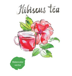 Hibiscus tea watercolor vector