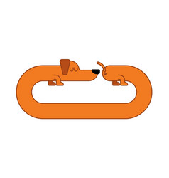 long dog dachshund isolated gaunt home pet vector image