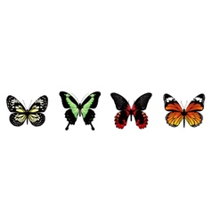 butterflies set vector image vector image