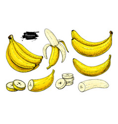 Banana set drawing isolated hand drawn vector