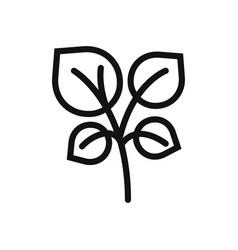 oregano icon vector image
