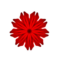 red flower on a white background vector image