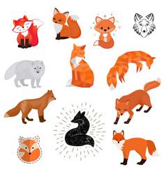 fox cartoon cute of animal vector image vector image