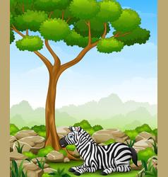 Cartoon zebra lay down in the jungle vector