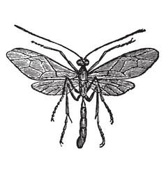 Species ophion vintage vector