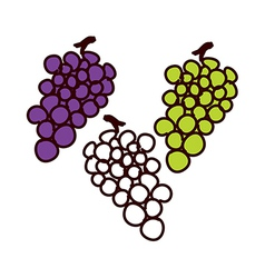 The grapes vector