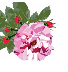 Delicate Pink Rose isolated vector image