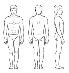 male figure vector image