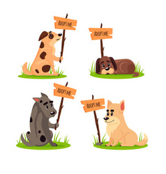 set of sitting homeless dogs with a poster adopt vector image