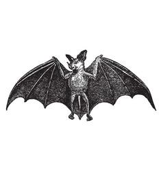 Spectral bat vintage vector