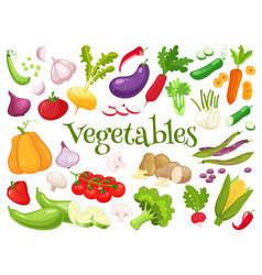 set of fresh vegetables for your design vector image vector image