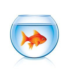 Goldfish in bowl isolated vector